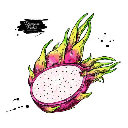 Dragon fruit vector drawing. Hand drawn tropical food illustration. Pink summer dragonfruit. Whole and sliced pitaya. Botanical vintage sketch for label, juice packaging design Standard-Bild - 123789278