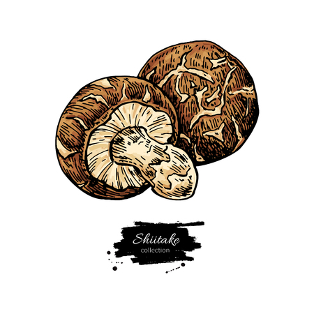 Shiitake mushroom hand drawn Illustration