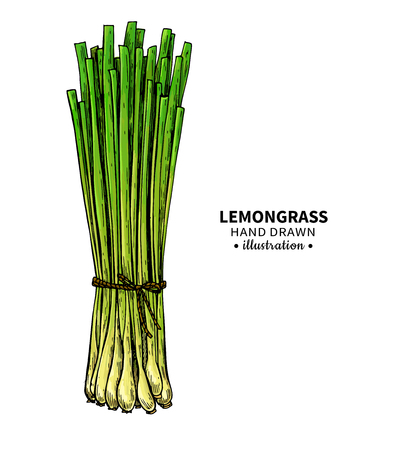 Lemongrass  drawing.