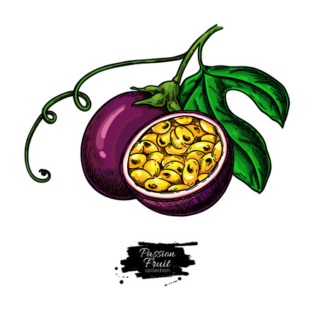 Passion fruit vector drawing. Hand drawn tropical food illustration. Summer passionfruit. Whole and sliced maracuya with leaves. Botanical sketch for label, juice packaging design Stock Vector - 123715534