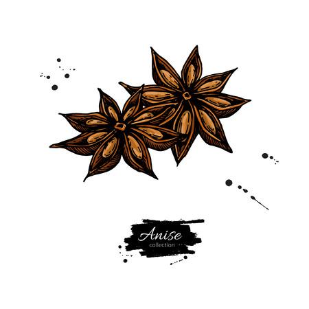 Anis-Stern-Vektor-Zeichnung. Handgezeichnete Skizze. Saisonale Lebensmittelillustration lokalisiert auf Weiß. Gewürz- und Geschmacksobjekt. Kochen und Aromatherapie Zutat.