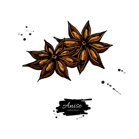 Anise Star Vector drawing. Hand drawn sketch. Seasonal food illustration isolated on white. Spice and flavor object. Cooking and aromaterapy ingredient.