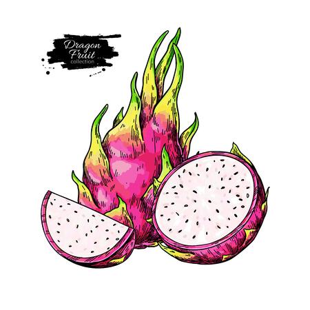 Dragon fruit vector drawing. Hand drawn tropical food illustration. Pink summer dragonfruit. Whole and sliced pitaya. Botanical vintage sketch for label, juice packaging design Standard-Bild - 123715539