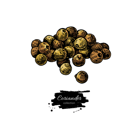 Coriander seed heap  hand drawn