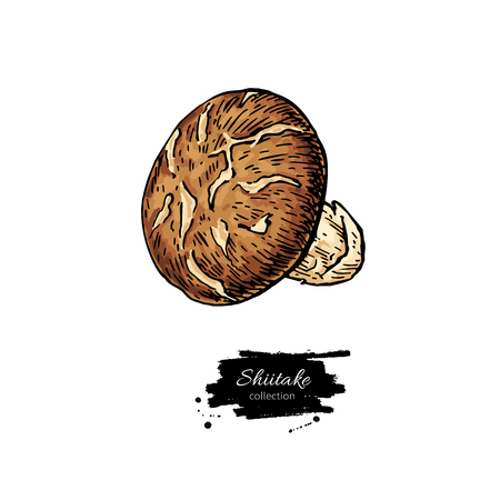 Shiitake mushroom hand drawn vector illustration set. Sketch food drawing isolated on white background. Organic vegetarian product. Great  for menu, label, product packaging, recipe