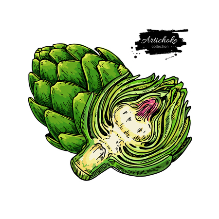Artichoke hand drawn Illustration