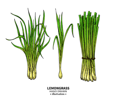 Lemongrass  drawing set