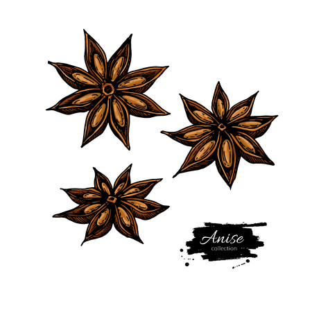 Anise Star  drawing.