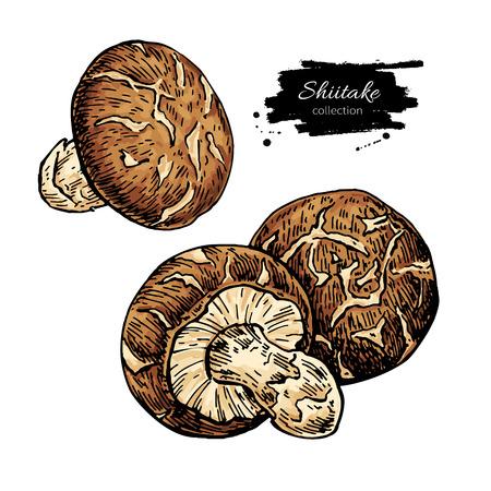 Shiitake mushroom hand drawn Illustration