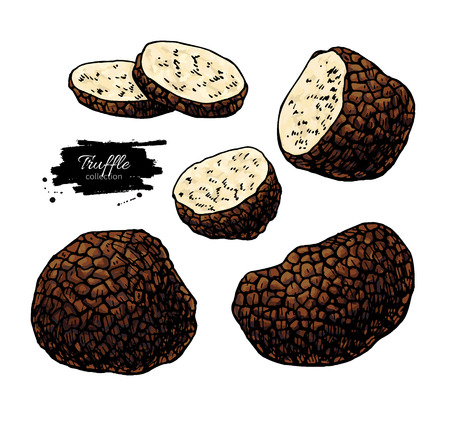Truffle mushroom hand drawn