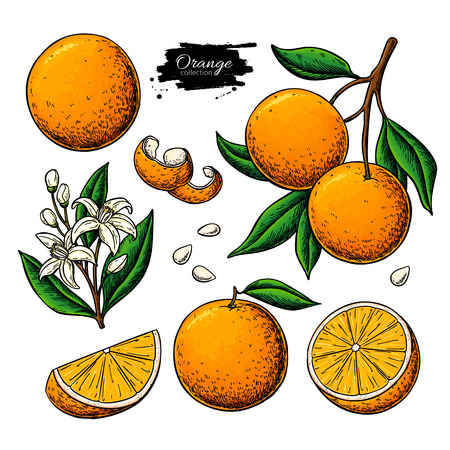 Orange fruit  drawing. Foto de archivo - 121885005