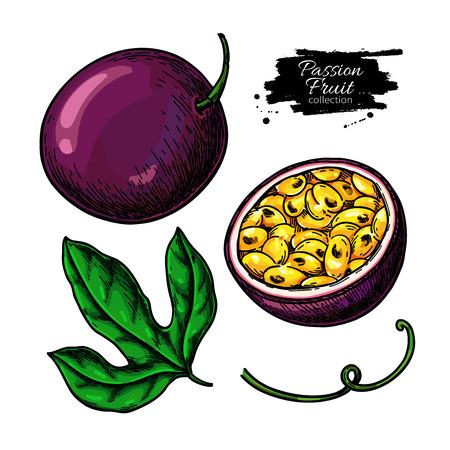 Conjunto de dibujo vectorial de fruta de la pasión. Ilustración de comida tropical dibujada a mano. Objetos de maracuyá de verano. Maracuyá entera y en rodajas. Boceto botánico para etiqueta, diseño de envases de jugo.