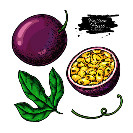 Passion fruit vector drawing set. Hand drawn tropical food illustration. Summer passionfruit objects. Whole and sliced maracuya. Botanical sketch for label, juice packaging design