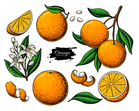 Orange fruit  drawing. Foto de archivo - 121885008