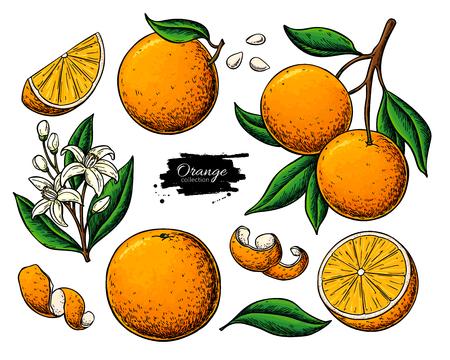Orange fruit  drawing.