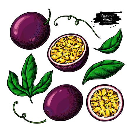 Passion fruit  drawing set. Illustration