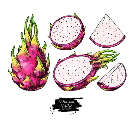 Dragon fruit vector drawing set. Hand drawn tropical food illustration. Pink summer dragonfruit. Whole and sliced pitaya. Botanical vintage sketch for label, juice packaging design Stock Vector - 122884809