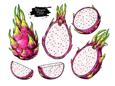 Dragon fruit vector drawing set. Hand drawn tropical food illustration. Pink summer dragonfruit. Whole and sliced pitaya. Botanical vintage sketch for label, juice packaging design Standard-Bild - 122725294