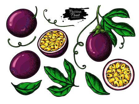 Passionsfrucht-Zeichnungsset. Vektorgrafik