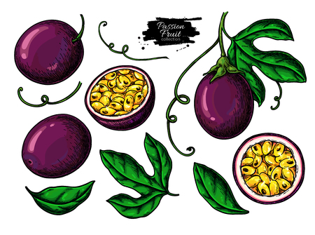 Passion fruit  drawing set. Illustration
