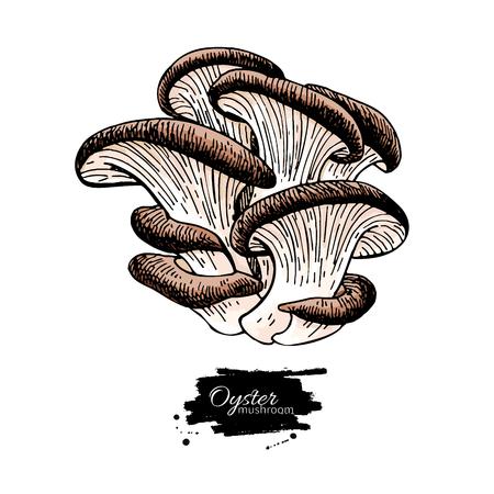 Oyster mushroom hand drawn