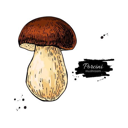 Porcini mushroom hand drawn