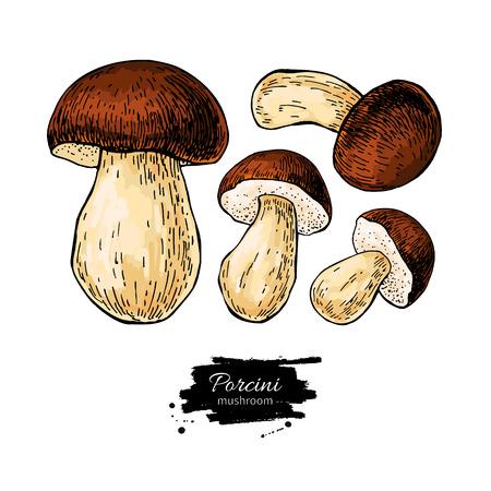 Porcini mushroom hand drawn Stock Vector - 123429313