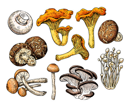 Mushroom hand drawn