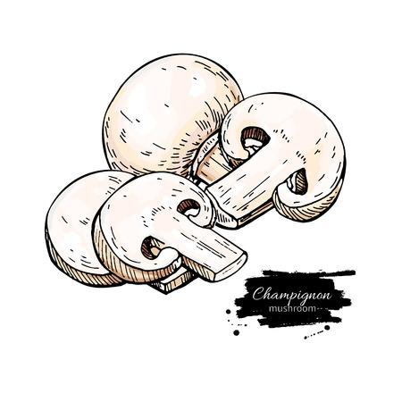 Champignon mushroom hand drawn