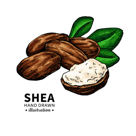 Shea butter vector drawing. 向量圖像