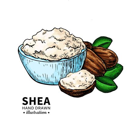 Shea butter vector drawing. Isolated illustration of nuts, butter 向量圖像
