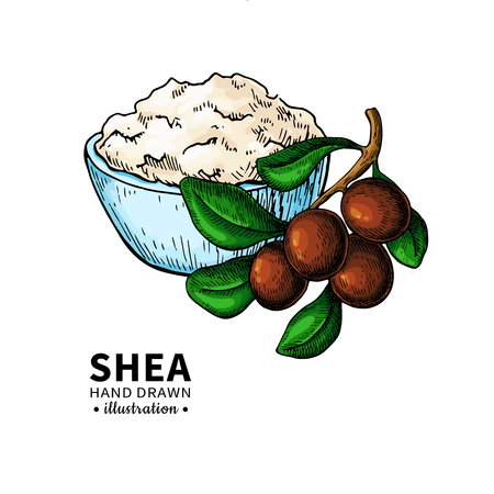 Shea butter vector drawing. Isolated illustration of nuts, butter and leaves. Organic oil and butter sketch. Beauty and spa, cosmetic ingredient. Great for label, poster, flyer, packaging design.