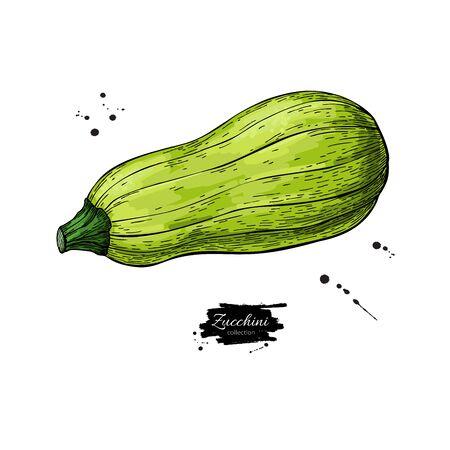 Zucchini hand drawn Isolated