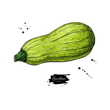 Zucchini hand drawn Isolated