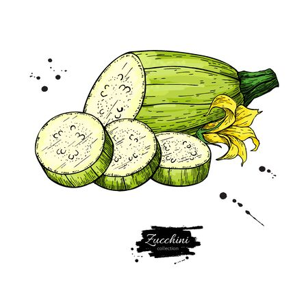 Zucchini hand drawn  Isolated Vegetable object with sliced pieces and flower. Çizim