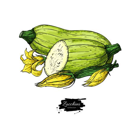 Zucchini hand drawn Isolated Vegetable object with sliced pieces and flower Ilustracja