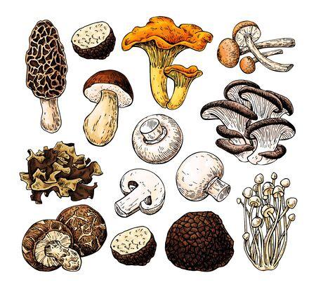Mushroom hand drawn vector illustration. Isolated Sketch food drawing. Champignon, morel, truffle, Illusztráció