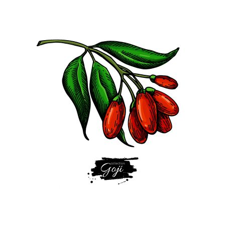 Goji berry vector superfood drawing set. Isolated hand drawn illustration on white background.