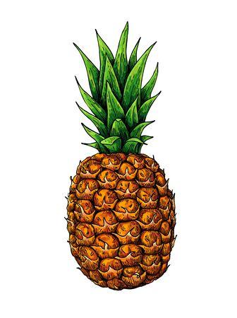 Ananas-Vektor-Zeichnung. Gezeichnete Illustration der tropischen Sommerfrucht Hand.