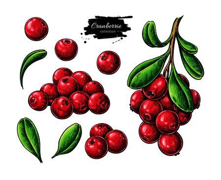 Cranberry-Vektor-Zeichnung. Isolierte Beerenzweigskizze auf weißem Hintergrund.
