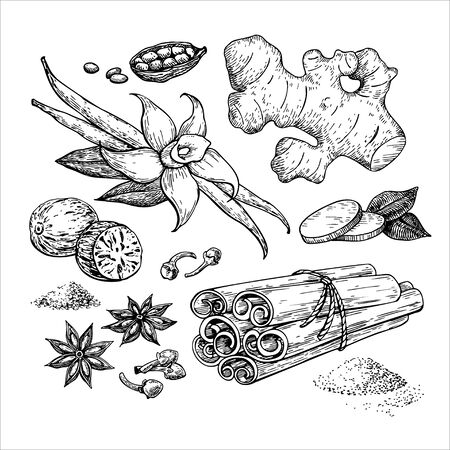 Winter spice vector drawing. Flavoring seeds and herbs for christmas food and drinks.