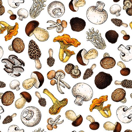 Mushroom hand drawn vector seamlees pattern. Isolated Sketch food drawing background. Champignon, morel, truffle, enokitake, porcini, oyster, honey agaric, chanterelle. Organic vegetarian product