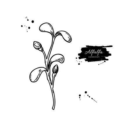 Alfalfa-Spross-Vektor-Zeichnung. Kai Wah-Rei-Abbildung. Isolierte Skizze der Babypflanze. Botanische Gravur von Heilkraut, rohe vegetarische Kost. Vektorgrafik