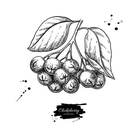 Rysunek wektor aronii. Ręcznie rysowane oddział botaniczny z jagodami i liśćmi. Ilustracja zioła. Szkic do herbaty, kosmetyków organicznych, medycyny, aromaterapii Ilustracje wektorowe