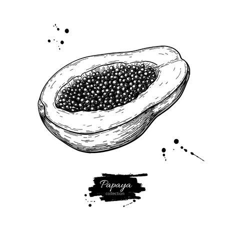 Papaya-Vektor-Zeichnung. Handgezeichnete tropische Fruchtillustration. Geschnittene Objekte mit Samen. Botanische Vintage-Skizze für Etikett, Saftverpackungsdesign, Menü