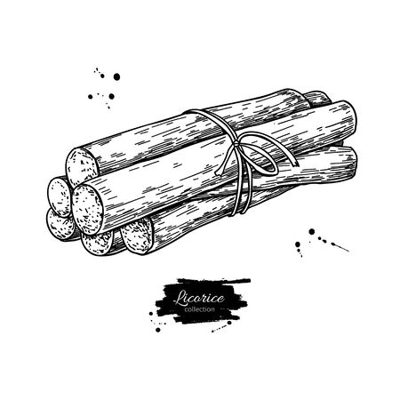 Licorice root bunch. Vector drawing. Botanical illustration. Herbal engraved style sketch.