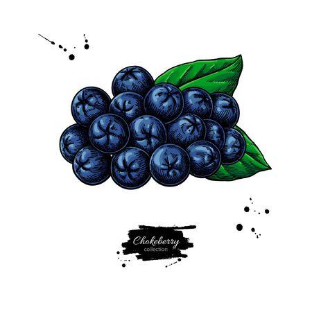 Rysunek wektor aronii. Ręcznie rysowane oddział botaniczny z jagodami i liśćmi.