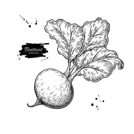 ビートルートベクトル描画。孤立した手描きオブジェクト。野菜の刻まれたスタイルのイラスト。詳細なベジタリアン料理のスケッチ。ファームマーケット製品。