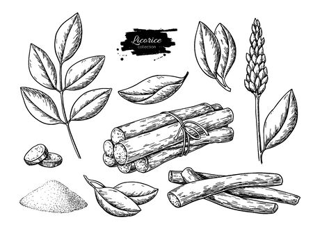 Licorice vector drawing. Bunch of roots, plants, branch with flower and leaves. Pile of ground powder.