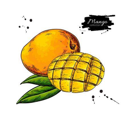 Mango-Vektor-Zeichnung. Handgezeichnete tropische Fruchtillustration. Vektorgrafik